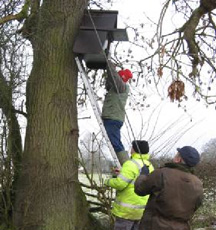 Erecting a tree box